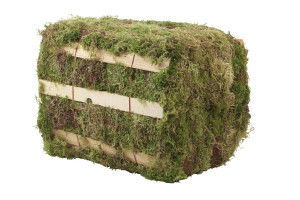 Hiawatha Evergreens Green Decorator Moss Bale Green 1ea/3.25Cuft