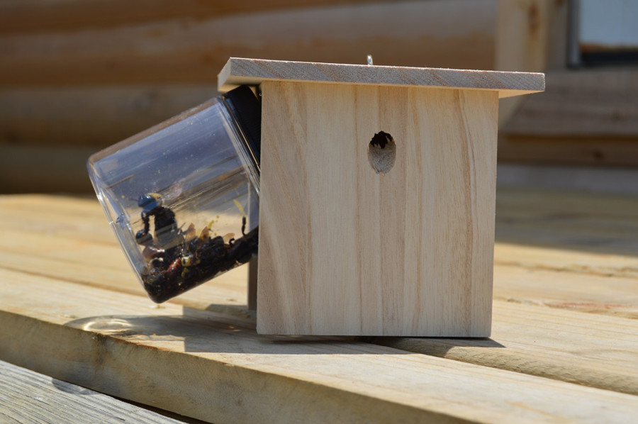 Bees N Things Angled Jar Hanging Wooden Carepenter Bee Trap 6ea