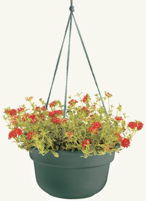 Bloem Dura Cotta Hanging Basket Planter Living Green 12ea/10 in