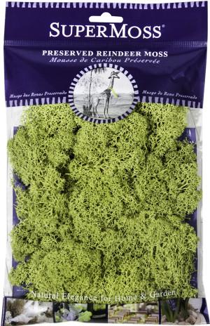 Supermoss Reindeer Moss Preserved Chartreuse Green 12ea/2 oz