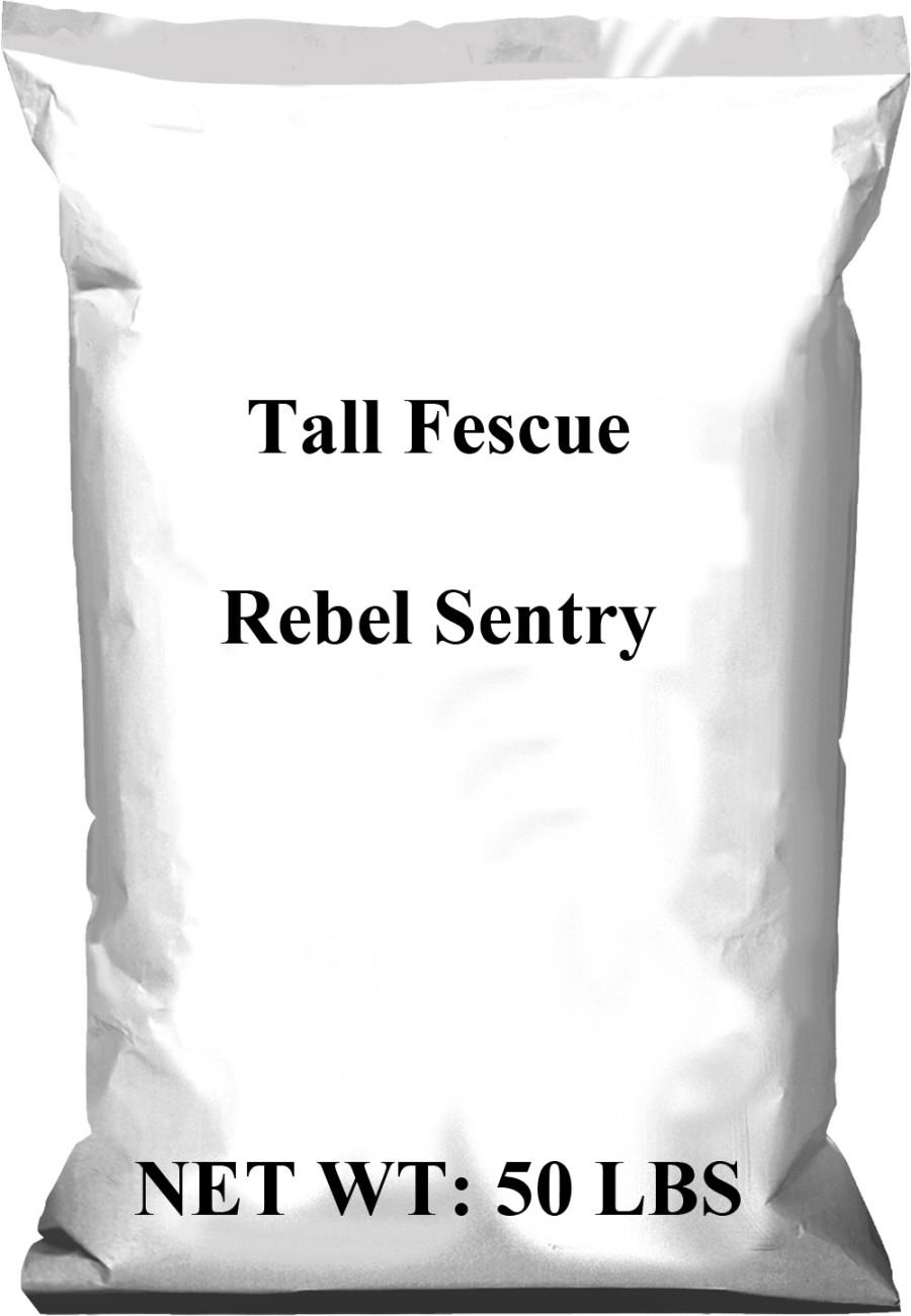 Pennington Rebel Tall Fescue