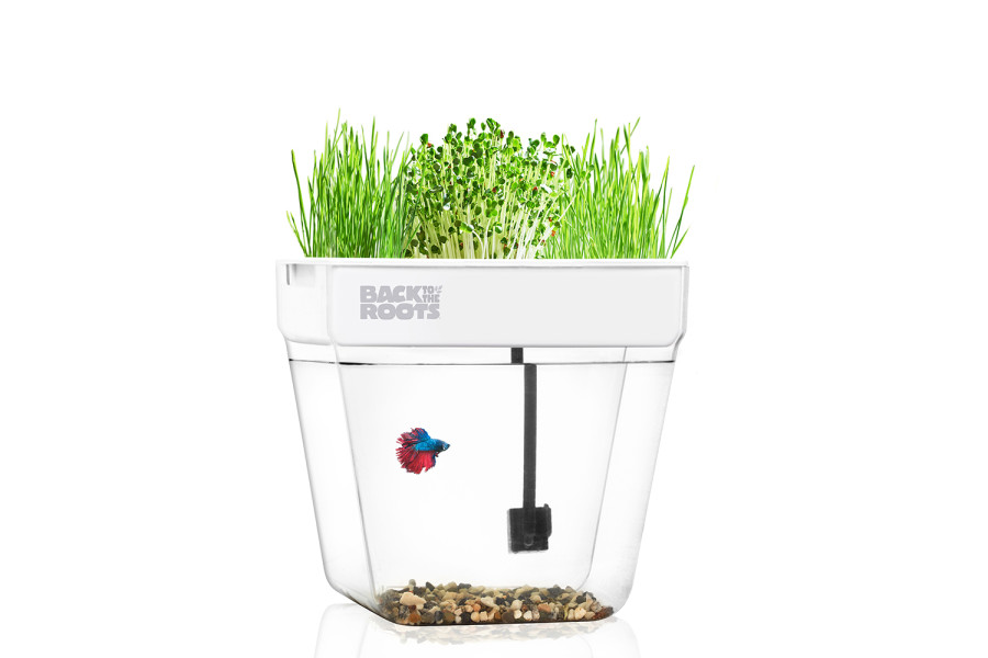Back to the Roots Water Garden Aquaponic Eco System Clear, White 1ea/9 In X 13.5 In X 13.5 in