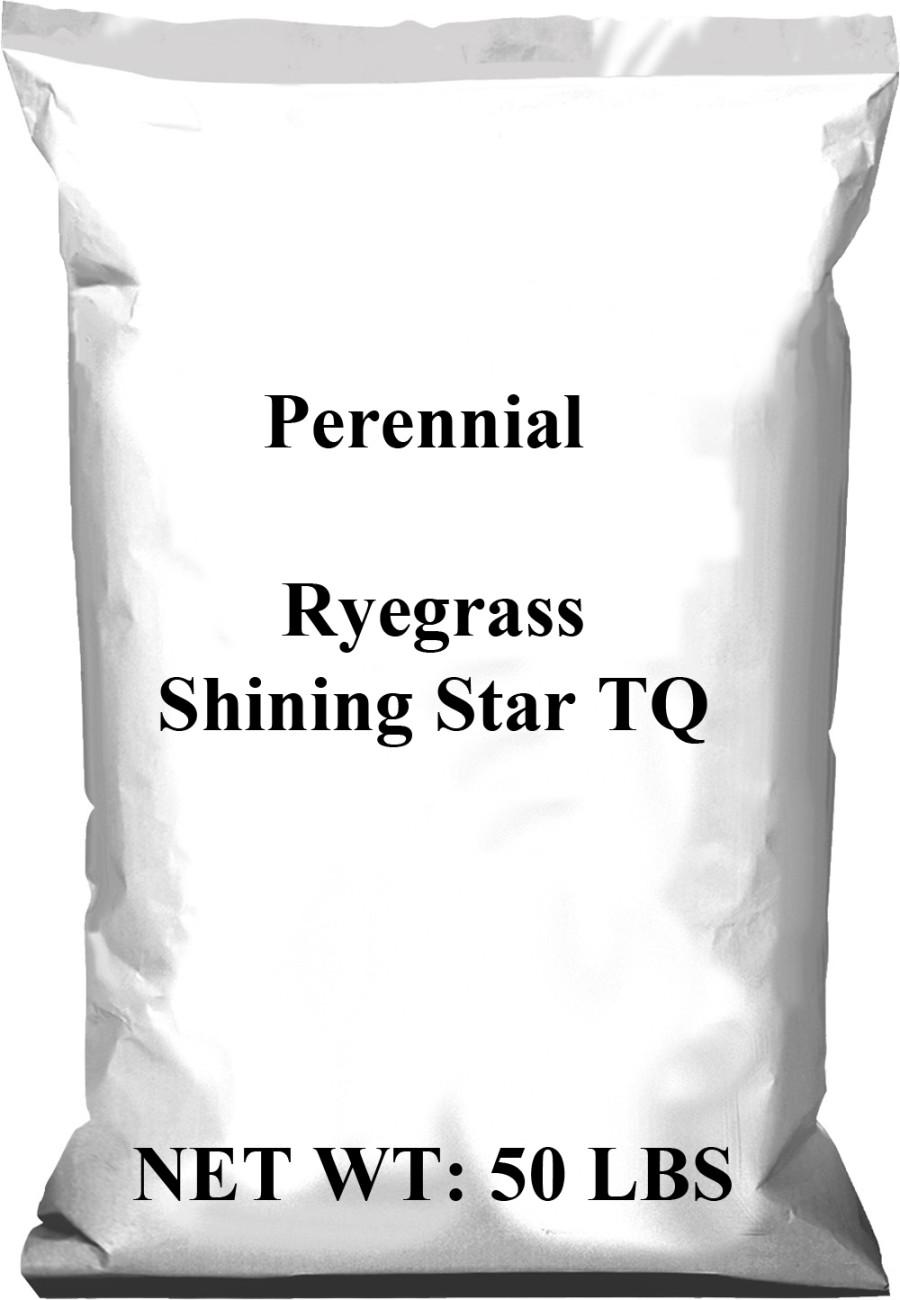 Pennington Perennial Rye Shining Star TQ 1ea/50 lb