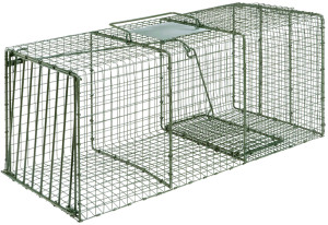 Duke Heavy Duty Extra Large Cage Trap for Large Raccoon Fox & Cat Green 1ea/36 In X 15 In X 14 in
