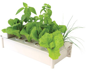 Hydrofarm Jump Start Salad Box Hydroponic Garden Kit 4ea