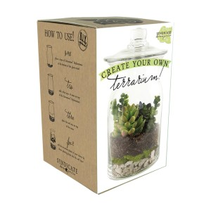 Syndicate Do It Yourself Terrarium Kit Clear 6ea/8 In X 5.75 in