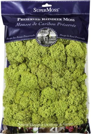 Supermoss Reindeer Moss Preserved Chartreuse Green 10ea/8 oz