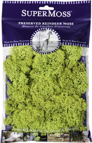 Supermoss Reindeer Moss Preserved Chartreuse Green 1ea/4 oz