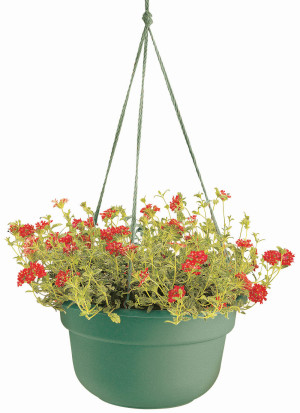 Bloem Dura Cotta Hanging Basket Planter Living Green 12ea/12 in