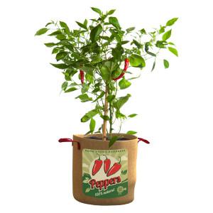 Panacea Peppers Grow Bag 12ea/10 gal