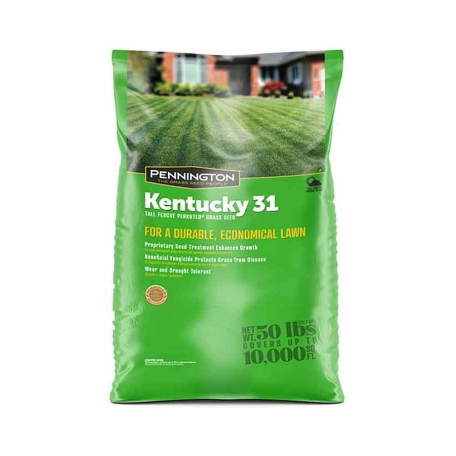 Pennington Kentucky 31 Tall Fescue Penkoted Grass Seed 1ea/50 lb