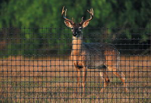 Tenax C-Flex Deer Fence Black 1ea/7.5Ftx100 ft