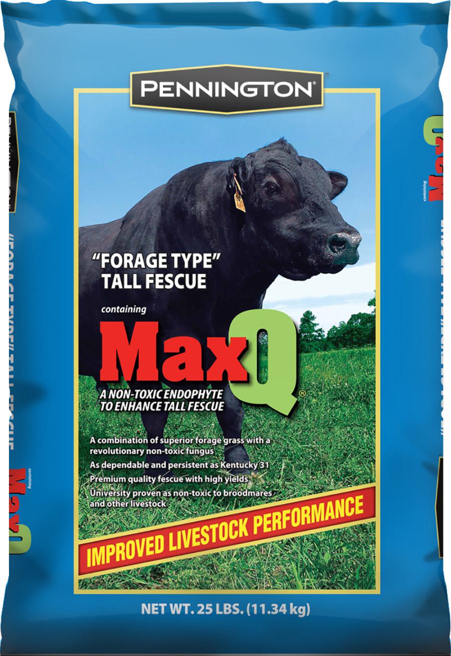 Pennington MaxQ Forage Tall Fescue Jesup 1ea/25 lb