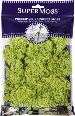 Supermoss Reindeer Moss Preserved Chartreuse Green 1ea/4 oz