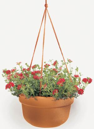 Bloem Dura Cotta Hanging Basket Planter Terra Cotta 12ea/10 in