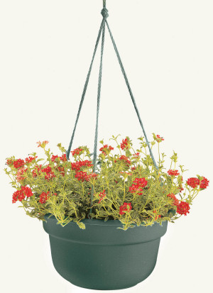 Bloem Dura Cotta Hanging Basket Planter Living Green 12ea/10 in