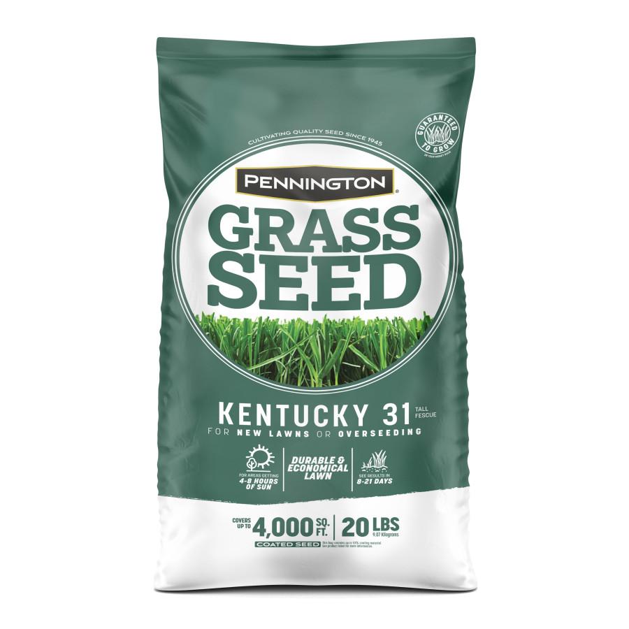 Pennington Kentucky 31 Tall Fescue Grass Seed 1ea/20 lb
