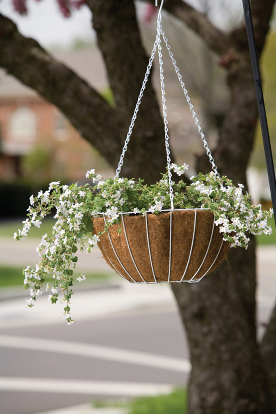Panacea Growers Hanging Basket With Liner