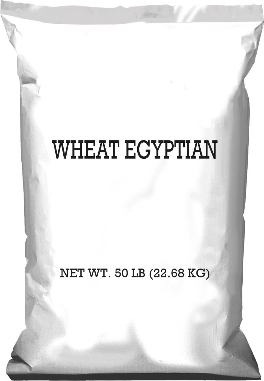 Pennington Wheat Egyptian 1ea/50 lb