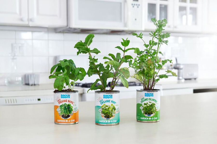 Back to the Roots Kitchen Herb Garden Cans Multi-Color 8ea/3 pk