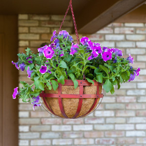 Panacea Hanging Basket Assorted Colors Assorted 1ea/14 in