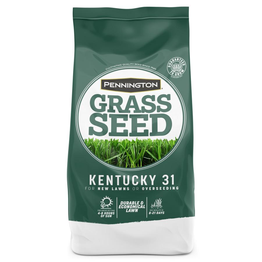 Pennington Kentucky 31 Tall Fescue Penkoted Grass Seed 1ea/5 lb